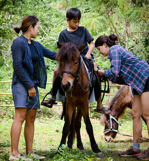 Kids can get to know a pony by feeding, fondling or riding it in the fields or paddock