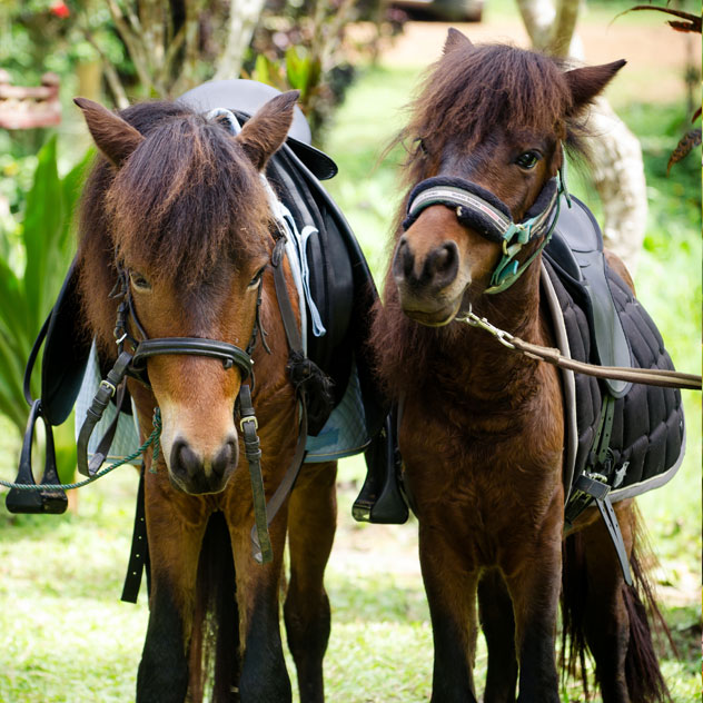 Jake And Elwood - Our 2 Horses at the Hillside Eco Friendly lodge- Luang Prabang - Laos